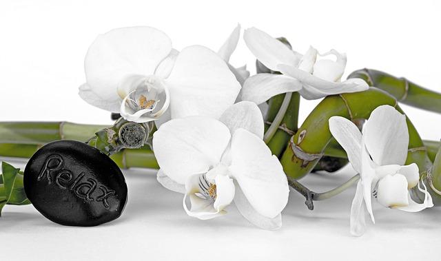 květiny, bambus, kámen