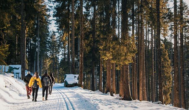 les, sníh, výparav, batohy