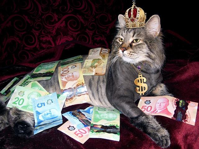 kočka s penězi